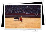 salamanca bullfight